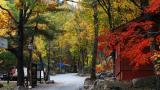 황정산 자연휴양림 야영장 작은 사진