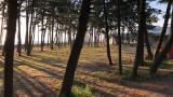 백사장 사계절 숲속 오토캠핑장 작은 사진